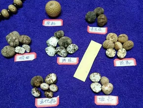 什么才是高密籽,清清楚楚从里到外看星月!