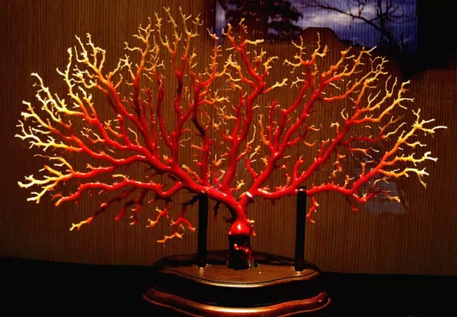 顶级aka红珊瑚已飚到20000/克以上啦!