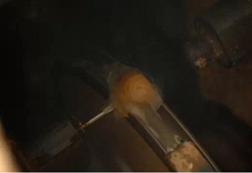 探秘:带你走进沉香工厂,顺手普及沉香猪猪佩戴常识