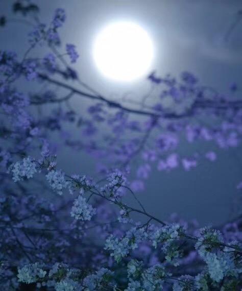 【月光石】 似一阵轻柔的风,缓缓拂过心间...-菩心晶舍