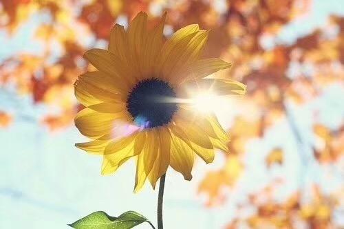 【菩心 | 钛晶】 犹如温润舒适的小太阳,温暖如春-菩心晶舍