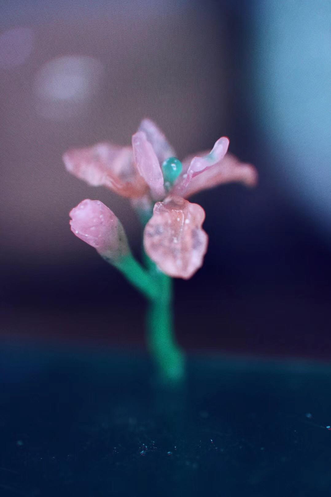 她说,鸢尾花的花语是信仰者的幸福。-菩心晶舍